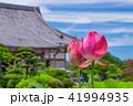 蓮 花 成福寺の写真 41994935