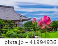 蓮 花 成福寺の写真 41994936