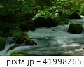 奥入瀬渓流 渓流 新緑の写真 41998265