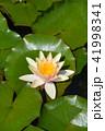 お花 フラワー 花の写真 41998341