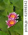 お花 フラワー 咲く花の写真 41998342