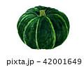 水彩画 かぼちゃ 野菜のイラスト 42001649