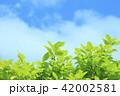 新緑と青空 42002581