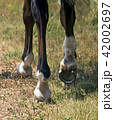 Leading horse walking along the sand track. 42002697