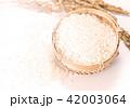 水田 米 稲の写真 42003064