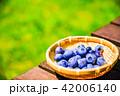 ブルーベリー 収穫 果物の写真 42006140