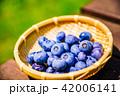 ブルーベリー 収穫 果物の写真 42006141
