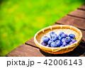 ブルーベリー 収穫 果物の写真 42006143