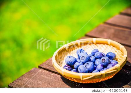 庭先で育てたブルーベリーの収穫 42006143