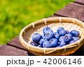 ブルーベリー 収穫 果物の写真 42006146