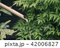 Bamboo water fountain in nature background 42006827