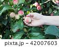 りんご アップル リンゴの写真 42007603