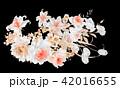 透明水彩 水彩画 花のイラスト 42016655