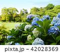 【岡山・後楽園】初夏のアジサイ 42028369