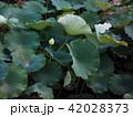 【岡山・後楽園】花葉の池 42028373