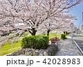 桜とバス停とベンチ 42028983
