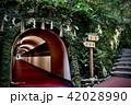 南蔵院のトンネル 42028990