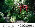 南蔵院の鳥居と池 42028991