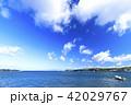 小和田湾の初夏 42029767