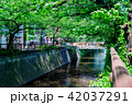 新緑 川 河川の写真 42037291