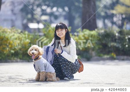 女性 犬の散歩 42044003