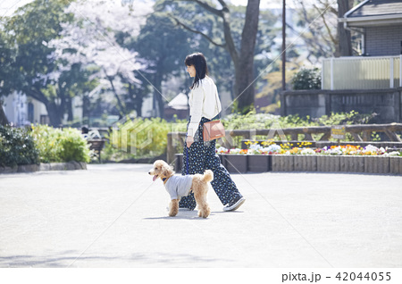 女性 犬の散歩 42044055