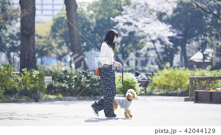 女性 犬の散歩 42044129