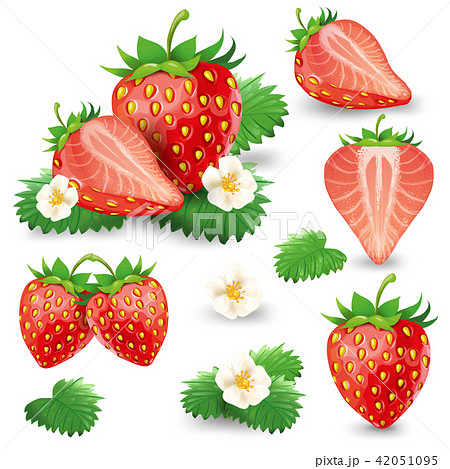 Ripe strawberry with leaves and blossom set 42051095