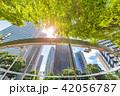 新緑 夏 ビル群の写真 42056787