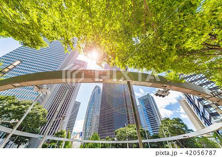 新緑と高層ビル群 42056787