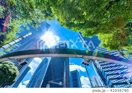 新緑と高層ビル群 42056790