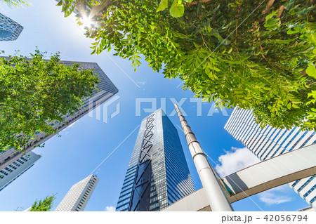 新緑と高層ビル群 42056794