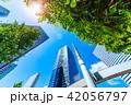 新緑 夏 ビル群の写真 42056797