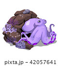 Cartoon purple octopus hiding in the rock grotto. Inhabitants of the seas and oceans isolated on 42057641