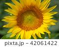 夏 花 植物の写真 42061422