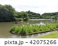 初夏の三溪園三重塔 横浜 神奈川県 42075266