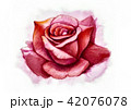 Big rose painting with love by watercolor style 42076078