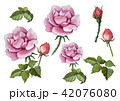 Big rose painting with love by watercolor style 42076080