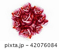 Big rose painting with love by watercolor style 42076084