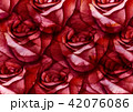 Big rose painting with love by watercolor style 42076086