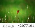 蝶 42077101