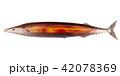 秋刀魚 さんま 秋の味覚のイラスト 42078369