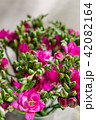 bright pink freesia flowers in glass vase on wooden table. Beautiful summer bouquet. Arrangement 42082164