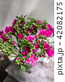 bright pink freesia flowers in glass vase on wooden table. Beautiful summer bouquet. Arrangement 42082175