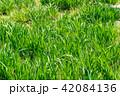 草むら 42084136