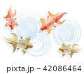 金魚 波紋 魚のイラスト 42086464