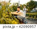 トウモロコシ コーン とうもろこしの写真 42090957