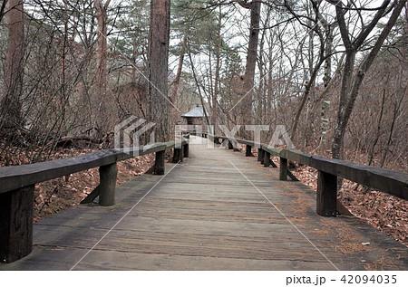 日本のナイアガラの滝と呼ばれる群馬県の吹割の滝の遊歩道を散歩する 42094035