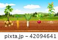 じゃが芋 ジャガイモ 芋のイラスト 42094641
