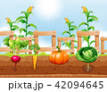 にんじん キャロット 人参のイラスト 42094645